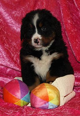 P-Wurf - Penelope mit 6 Wochen