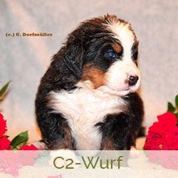 C2-Wurf vom Diepmannsbachtal