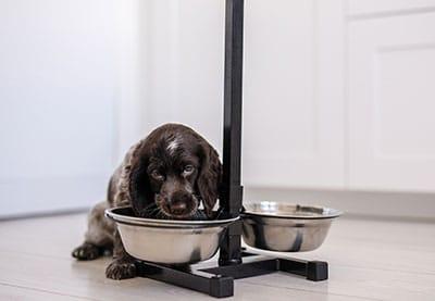 Fütterung Hund
