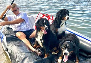 Thomas mit Berner Sennenhunden
